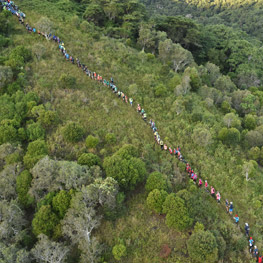 Transcaledonienne race in New Caledonia